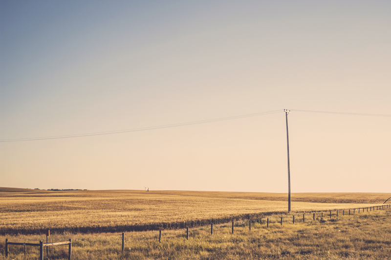 Prairie with fence and telephone pole